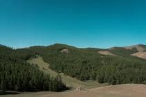 Lärchenwälder & Land Cruiser
